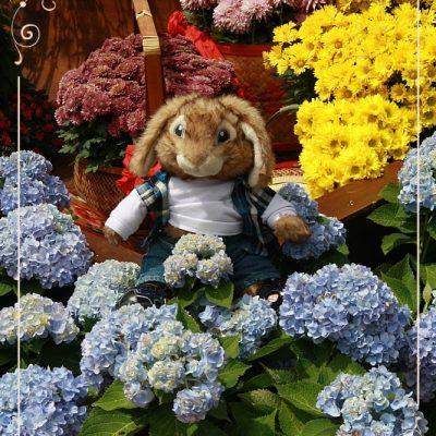 Кролик Себастьян в Сингапурском Парке Птиц